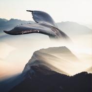 Whale In Fog